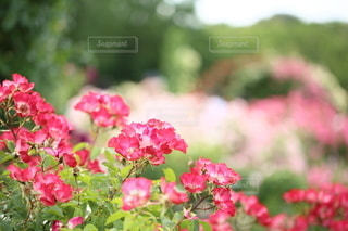 自然の写真・画像素材[5114]
