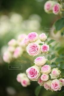 自然の写真・画像素材[5113]