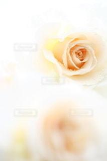 花の写真・画像素材[5108]