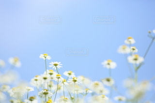 自然の写真・画像素材[5101]