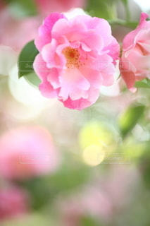 自然の写真・画像素材[5093]