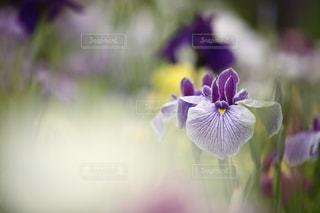 自然の写真・画像素材[5092]