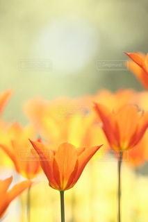 自然の写真・画像素材[5089]