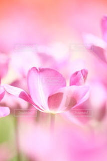 自然の写真・画像素材[5088]