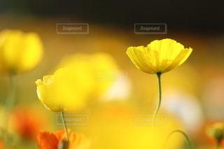 自然の写真・画像素材[5084]