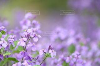 自然の写真・画像素材[5082]