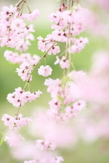 自然の写真・画像素材[5069]