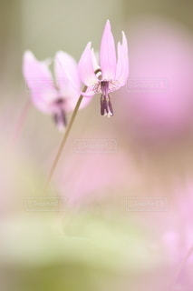 自然の写真・画像素材[5066]
