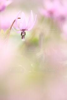 自然の写真・画像素材[5064]