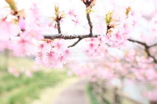 自然の写真・画像素材[5060]