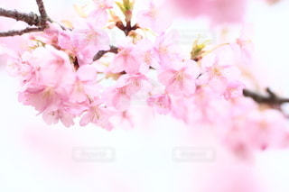 自然の写真・画像素材[5059]