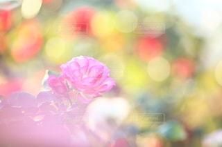 自然の写真・画像素材[5054]