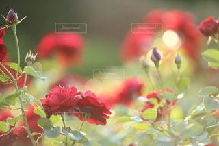 自然の写真・画像素材[5053]