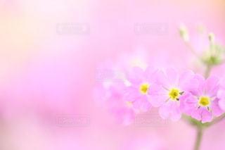 自然の写真・画像素材[5046]