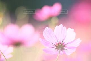 自然の写真・画像素材[5044]