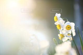 自然の写真・画像素材[5043]