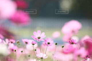 自然の写真・画像素材[5042]