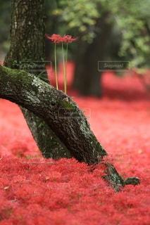 自然の写真・画像素材[5031]