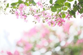花のクローズアップの写真・画像素材[2446847]