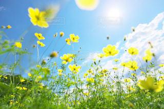 黄色い花の写真・画像素材[2446877]