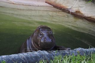 動物の写真・画像素材[267062]