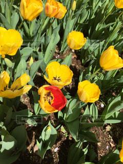 花の写真・画像素材[267030]