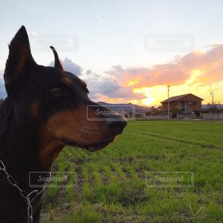 犬の写真・画像素材[267082]