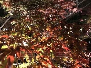 木のクローズアップの写真・画像素材[2531474]