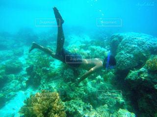 泳ぐの写真・画像素材[299106]