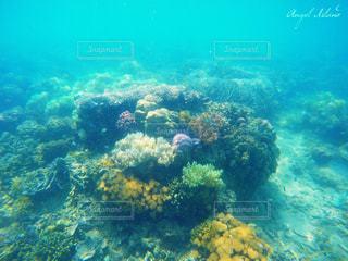海の写真・画像素材[301474]