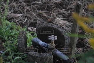 自然の写真・画像素材[268088]