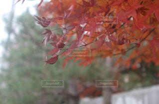 自然の写真・画像素材[268102]