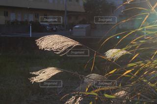 自然の写真・画像素材[268112]