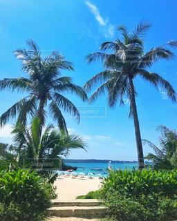 椰子の木とビーチ - No.830973