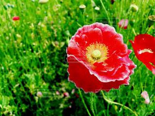 花の写真・画像素材[269925]