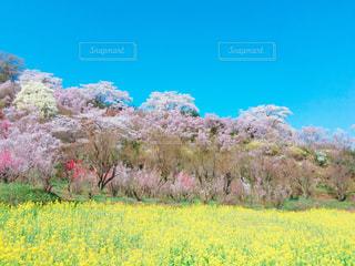 花の写真・画像素材[434790]