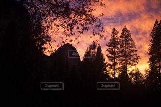 自然の写真・画像素材[5025]