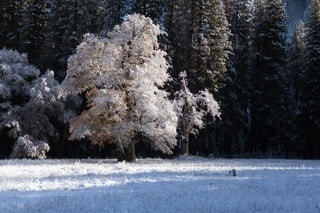 自然の写真・画像素材[4993]