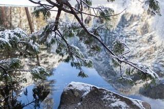 自然の写真・画像素材[4982]