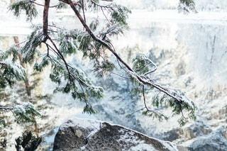 自然の写真・画像素材[4981]