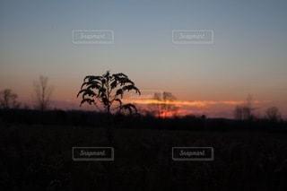 自然の写真・画像素材[4950]
