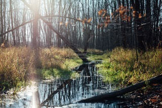 自然の写真・画像素材[4948]