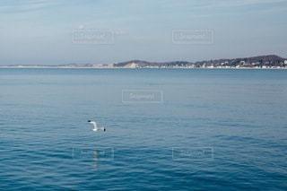 自然の写真・画像素材[4946]
