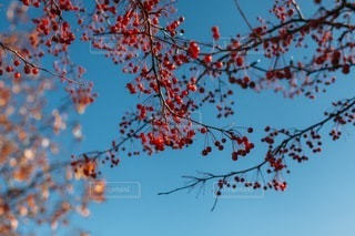 自然の写真・画像素材[4942]