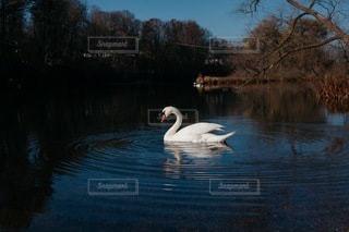 自然の写真・画像素材[4940]