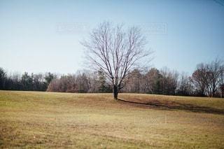 自然の写真・画像素材[4939]