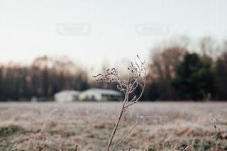 自然 - No.4936