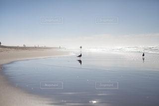 自然の写真・画像素材[4743]