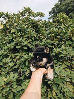 手乗りイヌの写真・画像素材[2439198]