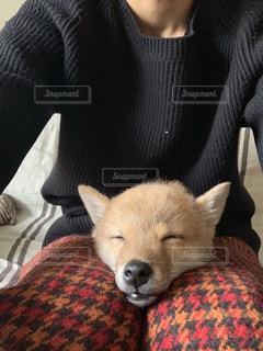 ねむいイヌの写真・画像素材[2439203]